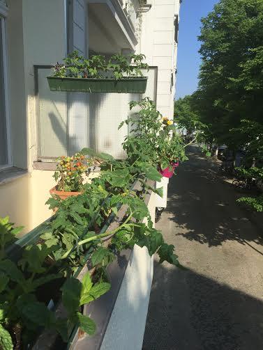anthea's balcony