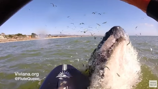 Watch: Flute player summons whale from the depths