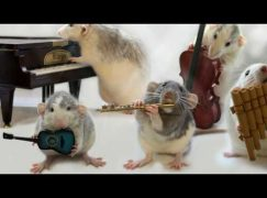 A mouse causes havoc in Washington orchestra concert