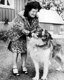 What Was The Name Of Bns Beloved St Bernard