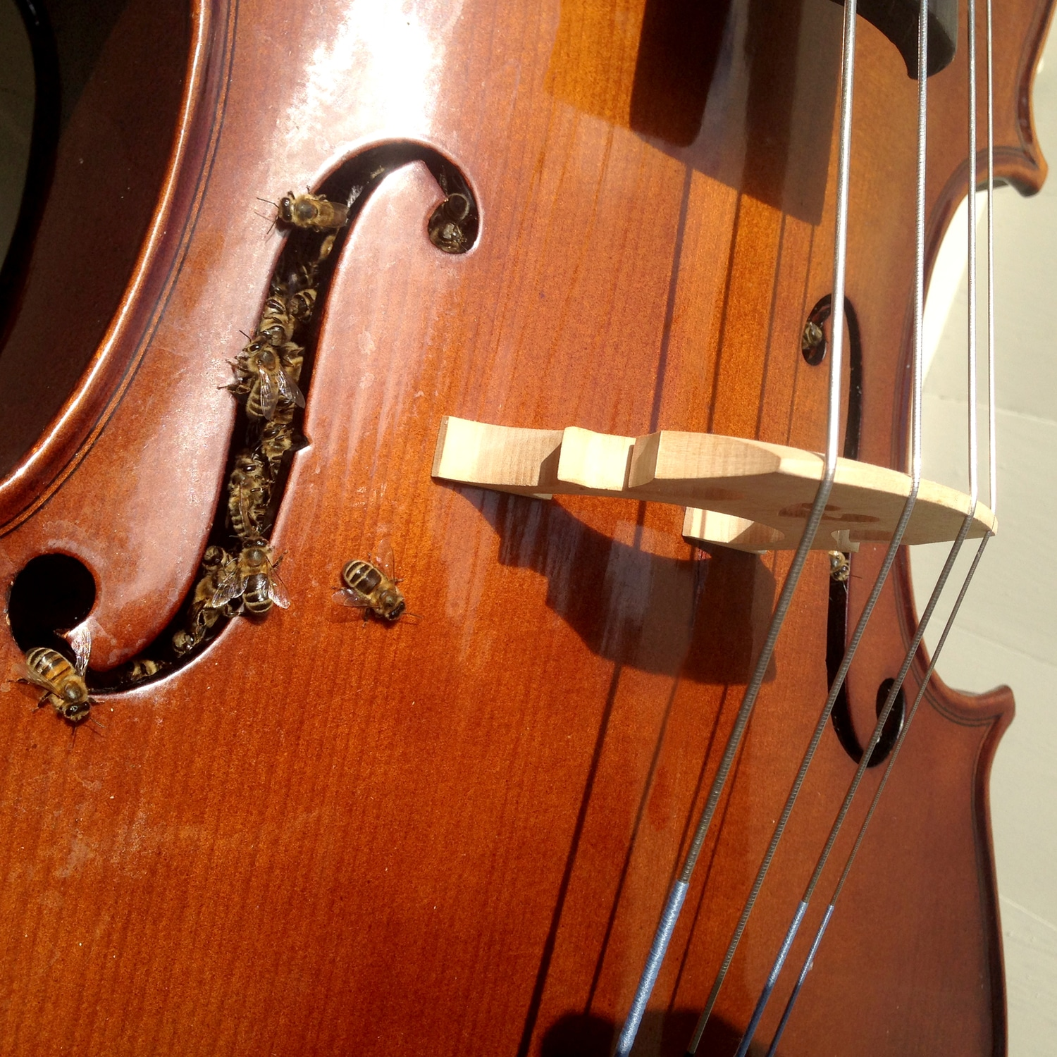 Help! My cello is full of bees