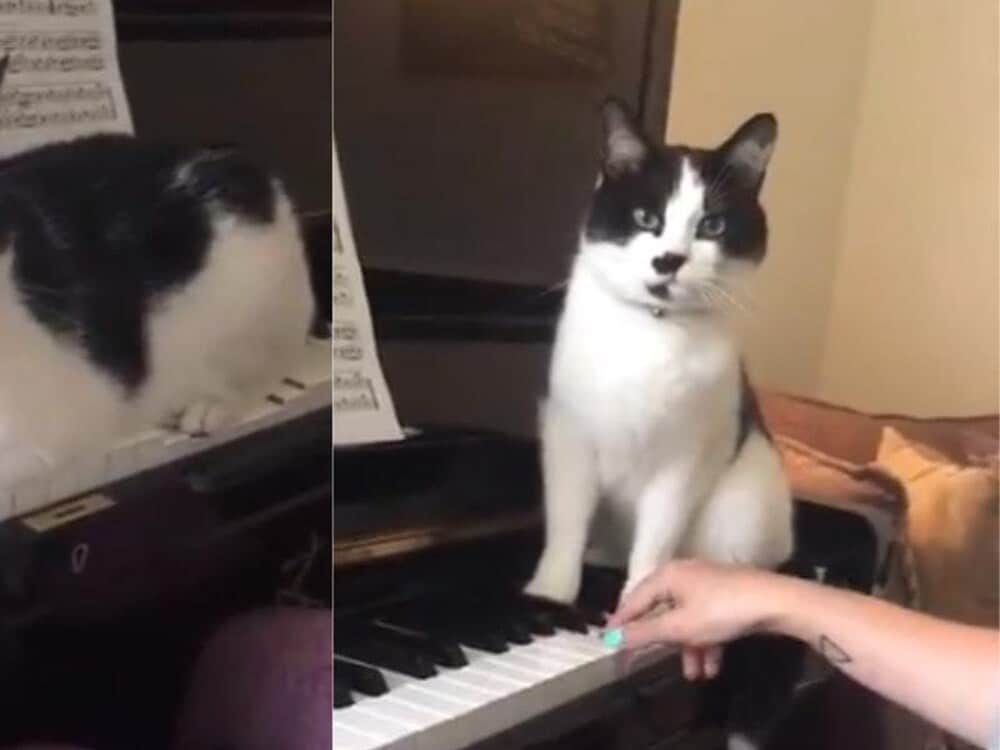 My cat plays piano better than my students