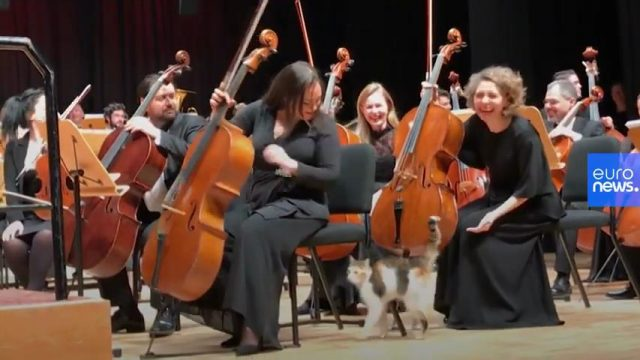 Stray cat is star of symphony concert