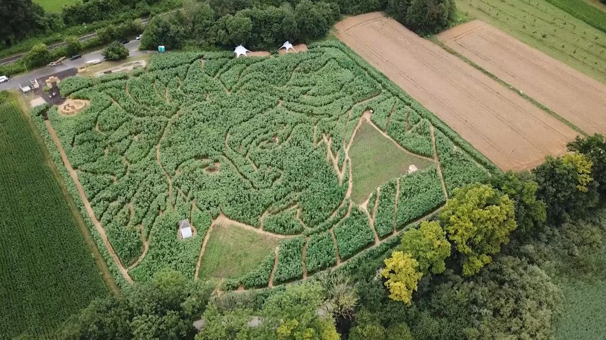 The face of Beethoven appears in a German field