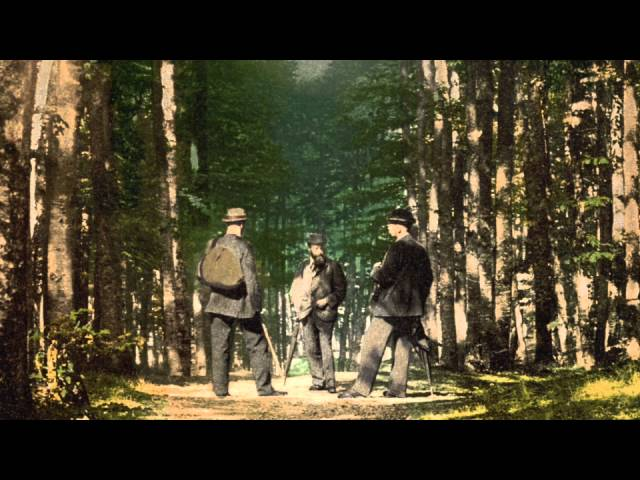 Slippedisc comfort zone (11): A walk in the woods